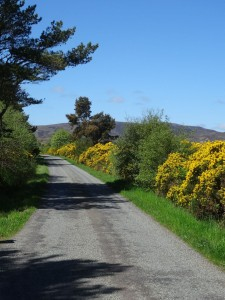 First day of summer at Edderton (1) - towards Edderton along the road from Aultnamain - 01 06 2016