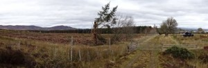 Panoramic view of cleared timber in Casandamff Woodsland near Admiral's Farm - 29 10 2016