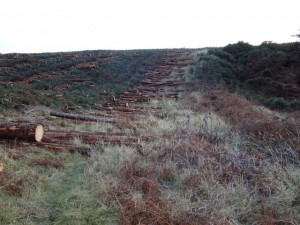 Felled timber blocking footpath to Admiral's Farm - 11 12 2016
