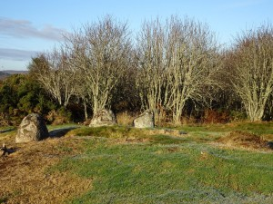 Edderton's Stone Circle (5) - 28 11 2016